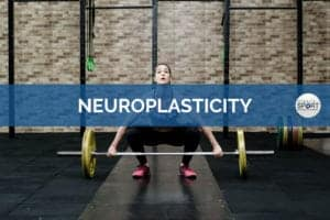 Neuroplasticity - Science for Sport - Sports Science